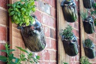 Borcane din sticla cu ierburi suspendate pe perete
