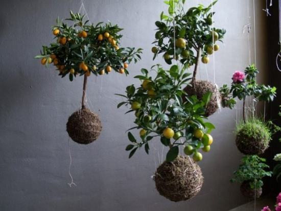 Flori si lamai suspendate