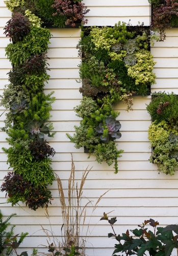 Gradina verticala cu plante diverse pe zidul terasei