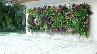 Plante tropicale amenajate intr-o gradina verticala