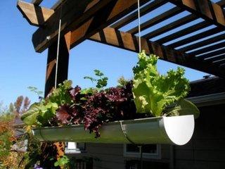 Salata plantata in burlan suspendat