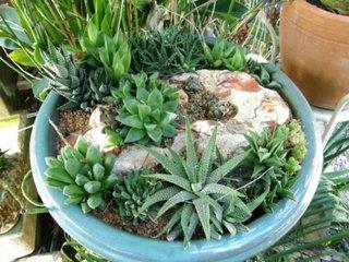 Aranjament cu Haworthia si alte plante grase