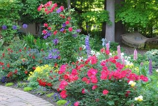 Flori frumoase de gradina