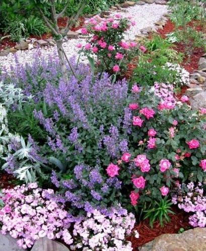 Flori multicolore de gradina