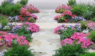 Flori pitice multicolore folosite ca si borduri