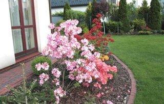 Flori roz de gradina