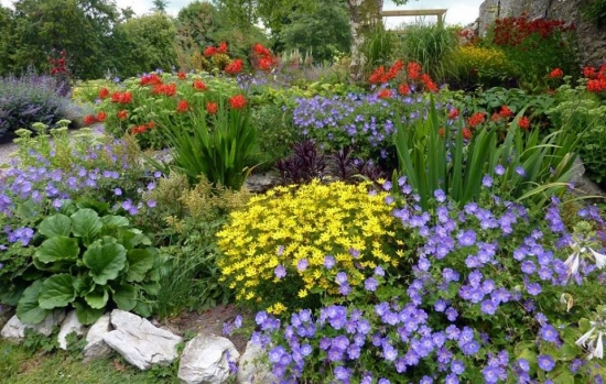 Gradina amenajata cu mix de flori colorate