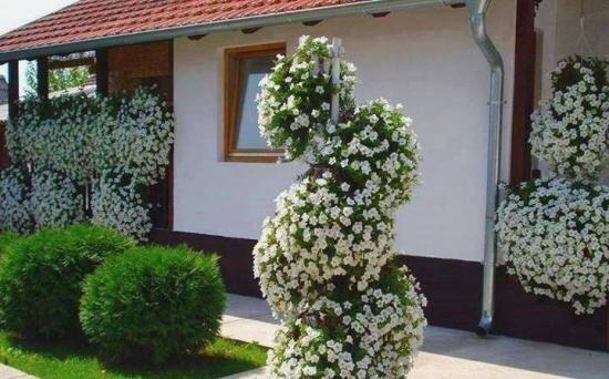Gradina cu flori albe agatatoare