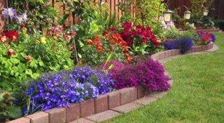 Gradina cu flori de diferite culori