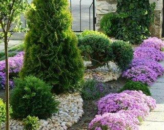 Gradina cu flori violet si arbusti