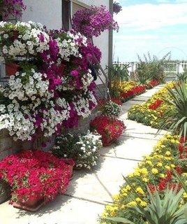 Gradina cu o multitudine de flori
