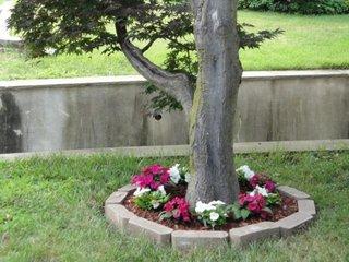 Copac cu rond de flori