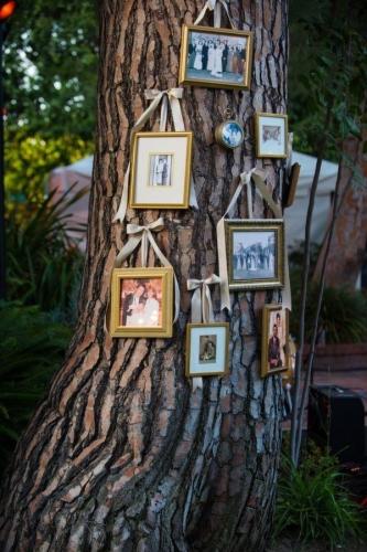 Fotografii agatate in copac