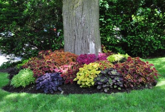 Plante decorative in jurul unui copac