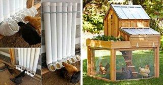 Idei ingenioase pentru cresterea gainilor in curtea casei