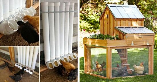 16 idei practice pentru cresterea pasarilor in curte