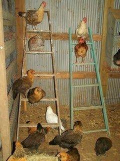 Suport din scara pentru pasari