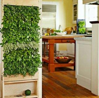 Gradina cu verdeata in bucataria de acasa