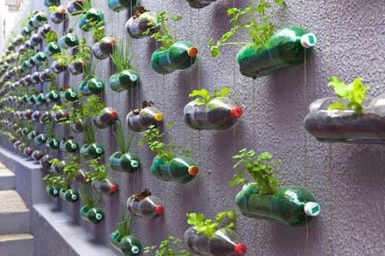 Decorarea gardului din curte cu multe sticle de plastic cu plante cultivate