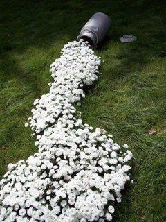 Idee de semanare a florilor de gradina