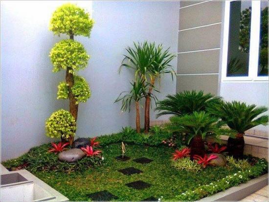 Gradina mica cu plante exotice