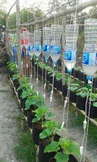 Idei de plantare in gradina perfecte pentru incepatori
