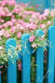 Gard pentru gradina din sipci de lemn vopsite in turcoaz