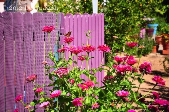 Gardut pentru gradina confectionat din lemn si vopsit cu roz aprins