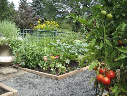 Gradina de legume cu gard din metal