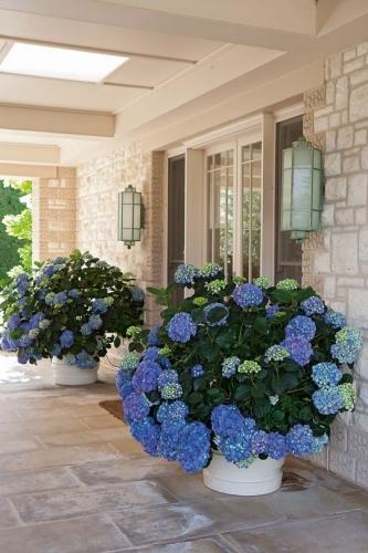 Vase cu hortensii albastre
