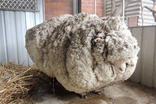 izolatii termice cu lana de oaie
