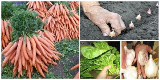 Plantati aceste legume toamna si le veti putea recolta primavara devreme