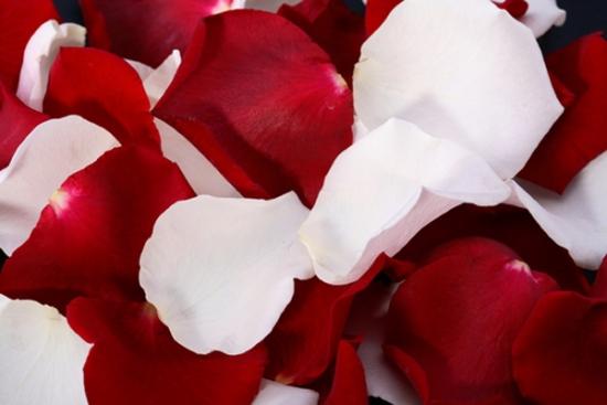 Petale de trandafir