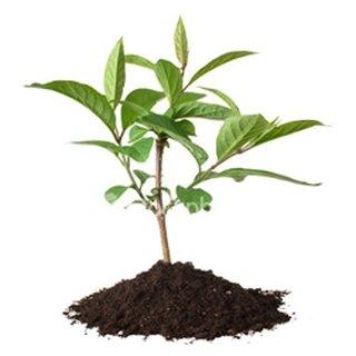 Plantarea unui copac in gradina toamna