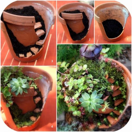 Etape pas cu pas pentru confectionare mini gradina
