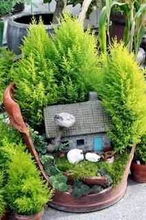 Muschi si arbusti mici decorativi pentru mini gradina