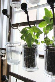 Borcane de sticla cu plante agatate pe sina metalica