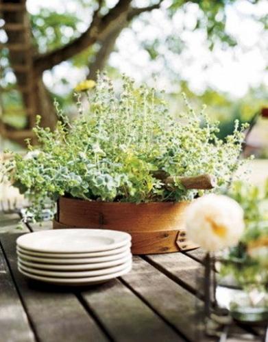Ghiveci cu plante aromatice facut dintr-un cosulet de lemn