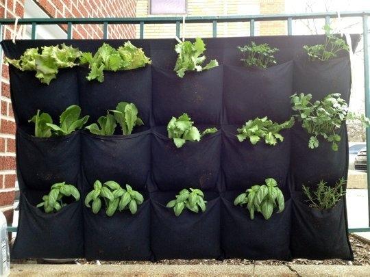 Idee de cultivare a consimentelor pe balcon folosind o panza cu multe buzunare