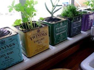 Ierburi aromatice plantate in cutii metalice de ceai