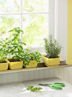Pervaz cu ghivece cu plante aromatice