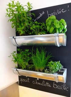 Plante aromatice plantate in burlane metalice