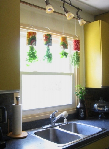 Plante aromatice suspendate cu susul in jos
