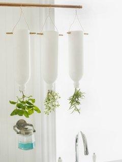 Sticle suspendate cu plante aromatice