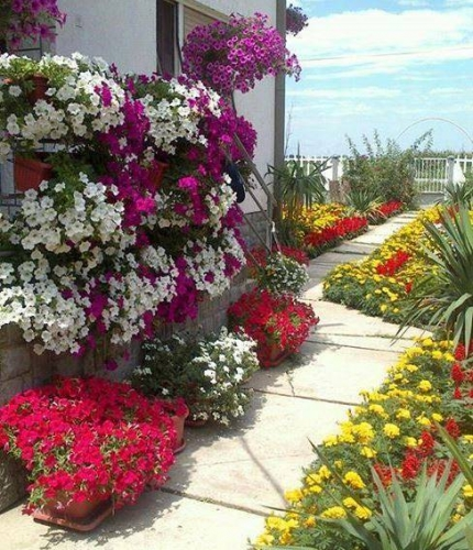 Alee curte betonata decorata pe margine cu multe flori