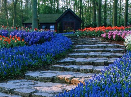 Borduri cu flori perene