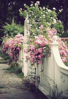 Gard bordurat plastifiat culoare alba si trandafiri roz cataratori