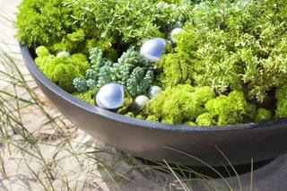 Muschi decorativ licheni naturali verzi aranjament floral