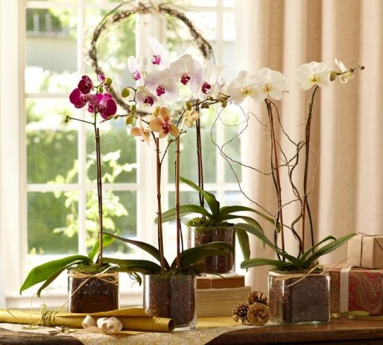 Aranjament floral din orhidee phalenopsis de diverse culori