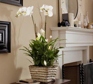 Living decorat cu orhidee faleno alba si crinul pacii